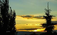 Sunset from Alberta (Trinimusic2008 - Stay blessed) Tags: trees light sunset sky sun canada nature clouds edmonton alberta allrightsreserved canadianfemalephotographers natureselegantshots 100commentgroup trinimusic2008 flickrsportal dblringexcellence tplringexcellence judymeikle nameaddedwithpicnik