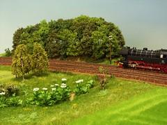 PICT9556b (dampflok44) Tags: modelleisenbahn modelrailroad modellbau modellbahn riesenbärenklau modelllandschaft modulanlage