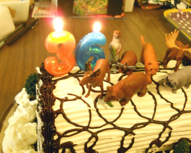 CAKE 8907
