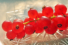 Red Currants (IngeHG) Tags: red macro home glass fruit pattern berries thenetherlands plate ight rodebessen redcurrants ribesrubrum themered nikond90 t189201152week38