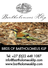 Birds of Bartholomeus Klip