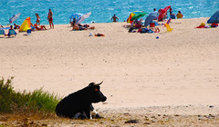 Nuevo vigilantee de la playa (Bolonia)