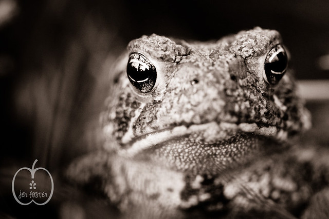 Week 38 - Ribbit