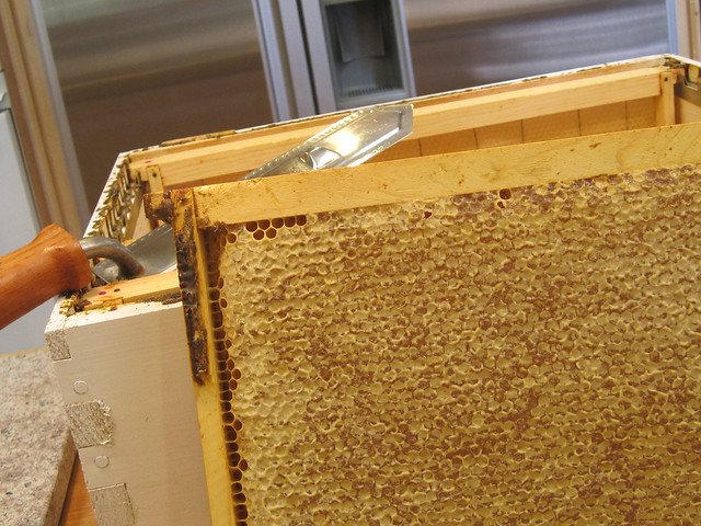 Honey Harvest 2011