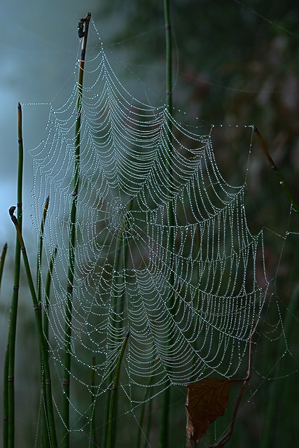 Columbia Bottom Conservation Area, in Saint Louis County, Missouri, USA -  spiderweb