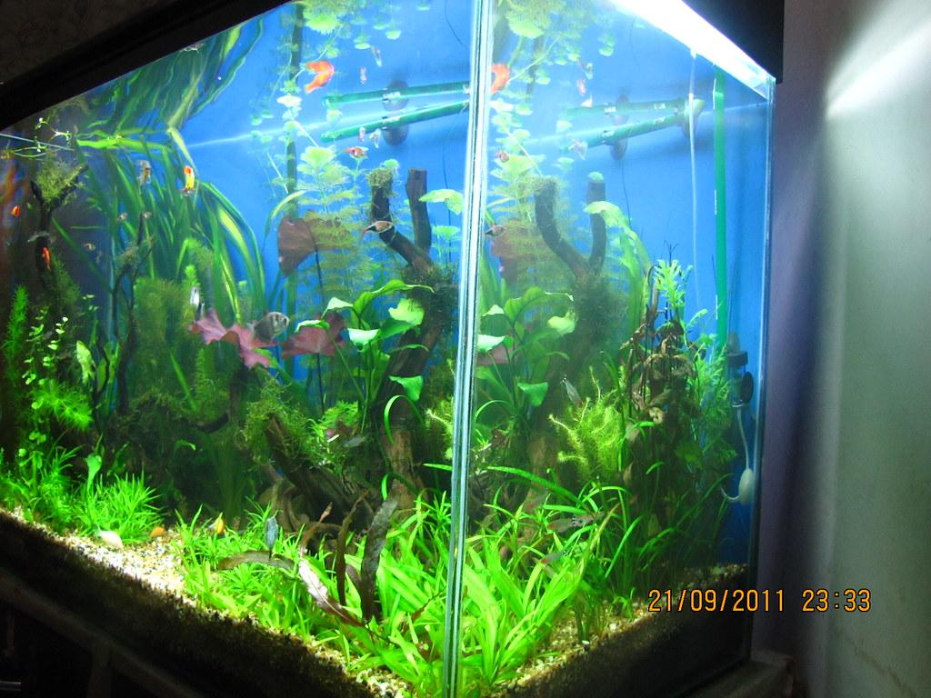 Fish aquarium in vile parle timing - Posted Fri Sep 23 2011 12 42 Am