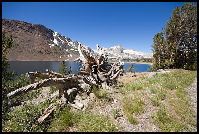 Yosemite treetrunk