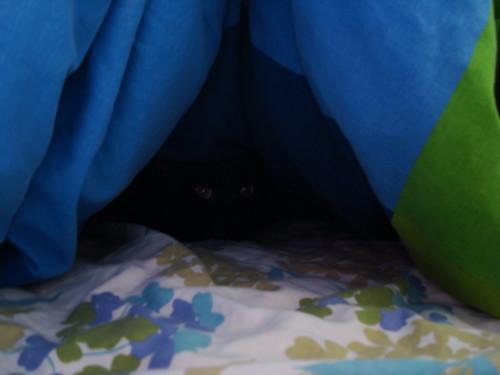 peek a boo...