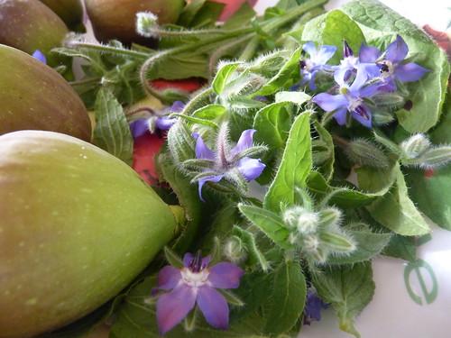 Cueillette de figues et bourrache