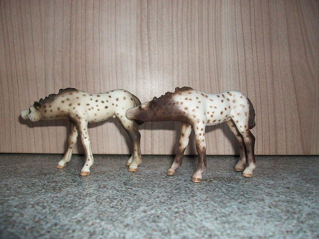 New arrivals in my herd! 6171879840_d8e802cb60_z