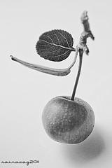 Mini manzana / Mini apple (sairacaz) Tags: bw macro blancoynegro blanco canon manzana negro bn tamron tamron90mm eos550d