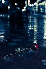 The street rose (Claus Jrstad) Tags: street red blackandwhite bw white black water rain rose lights bokeh redrose raindrops lonely claus lonesome jrstad clausjrstad clausjoerstad stunningphotogpin clausj joerstad