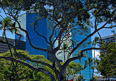 Between Fort and Bishop Street (jcc55883) Tags: trees reflections hawaii nikon oahu highrise honolulu fortstreet bishopstreet alohatowermarketplace nikond40