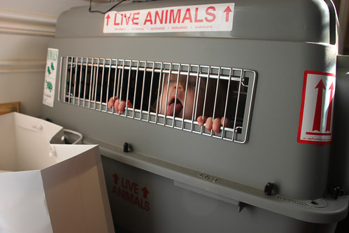 Live Animals!