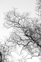 Tree (sandy richard) Tags: wildwood wildwoodstatepark newyorkstateparks longislandbeaches sandyrichard sandrarichard