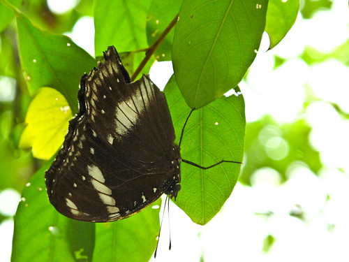 IMG_0841 Butterfly