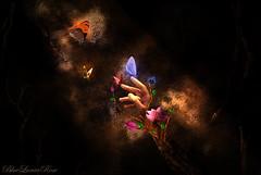 A Light of Life (BlueLunarRose) Tags: life light flower tree art photomanipulation butterfly dark hand butterflies fantasy bluelunarrose