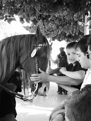 Linea di contatto (edge of contact) (one-eye memories) Tags: blackandwhite italia cavalli puglia animali biancoenero antichità paesi foggia hourse deliceto hoursesandmen
