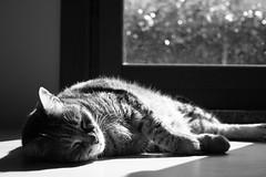 Addio Ale (un gatto di passaggio) Tags: love cat gatto amore gatta