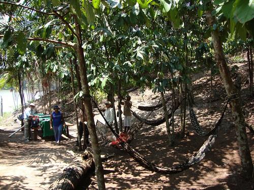 Amazonia201157