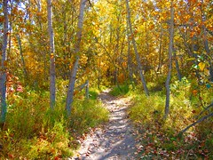Autumn Trails (Jim Sauchyn) Tags: autumn trees nature landscapes hiking trail aspens forests poplars