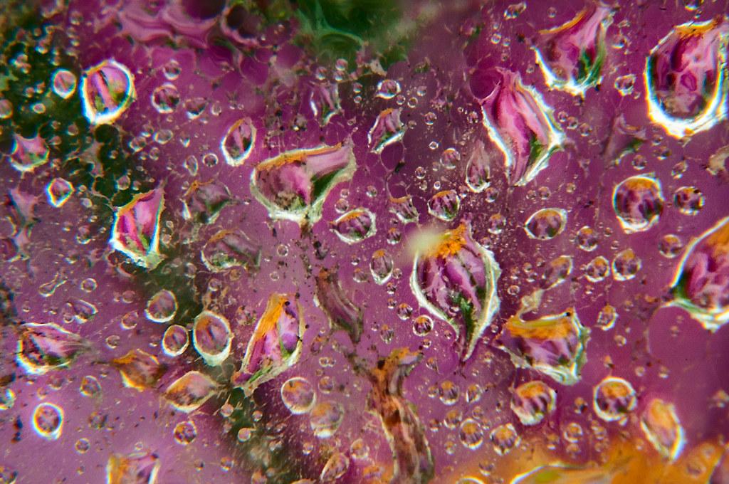 Anemone and Water Drops © Harold Davis