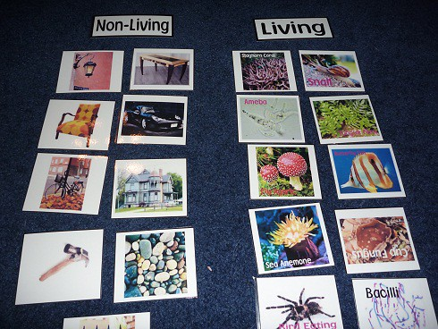 Non-Living and Living Sorting (Photo from Homeschool Den)