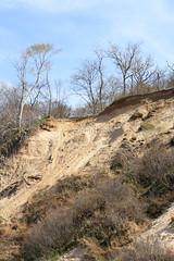 Eroding Coastal Bluff (sandy richard) Tags: usa newyork unitedstates geology wildwood calverton wildwoodstatepark newyorkstateparks sandyrichard longislandgeology sandrarichard