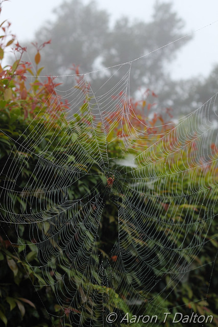 A Silky Web by Morning Dew