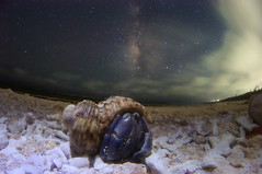 Milky Way Hermit crab (masahiro miyasaka) Tags: christmas travel blue autumn winter sky white snow flower tree nature beautiful japan night hermitcrab canon wonderful butterfly stars wonder outdoors iso3200 star nice fisheye explore galaxy fantasy astrophotography  wallpapers alpen hermit oneshot milkyway   startrail earthandsky  earthandspace Astrometrydotnet:status=failed peopleandspace bestnewcomer competition:astrophoto=2012