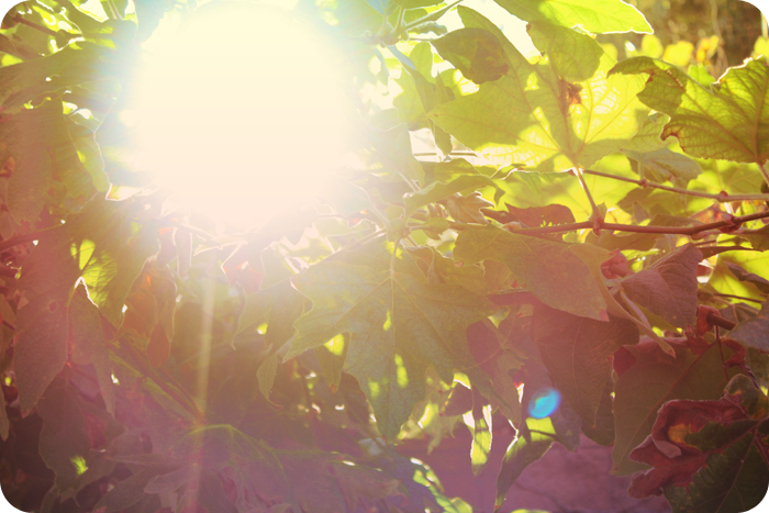 {september} sunflare | light