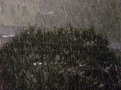 chuva (Gergia Gazzinelli) Tags: natureza chuva fujifilm s2800