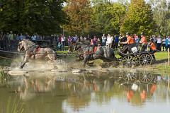 Powerhorse 2011 Arnhem (Tjeerdknierfotografie) Tags: arnhem paarden presikhaaf powerhorse waterbak paardensport waterspektakel paardesport tjeerdknierfotografie presikhaafleeft hindernisbaannr4