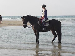 Cavalire sur la plage (claudio malatesta) Tags: horse france beach cheval video panasonic normandie normandy plage musicorso claudiomalatesta dmctz5 claudebenasouli