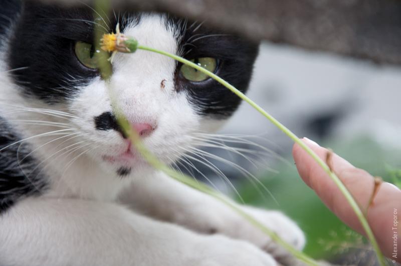 Cat @ Fort Cornwallis