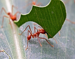 The Worker (Dave_O1 ~ Dave Edwards) Tags: color beautiful canon garden giant insect leaf big wings colours hand awesome an