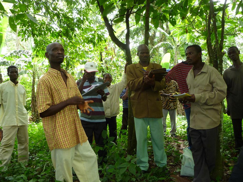 Conseil aux bonnes pratiques culturales cacao Togo