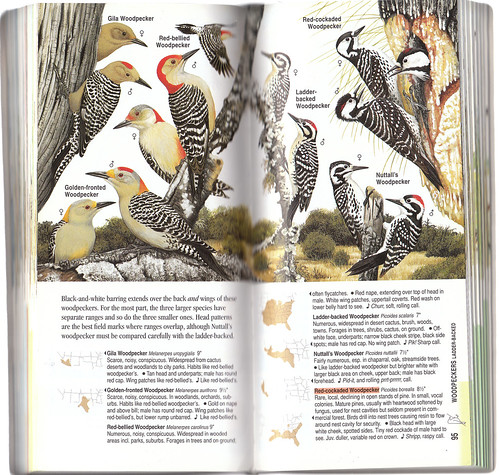ABC Woodpeckers