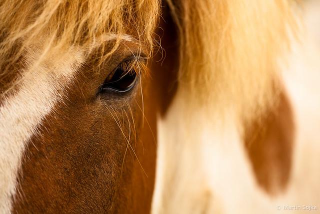 Eye Contact ~ Iceland