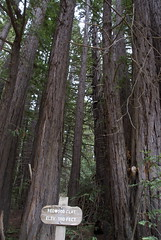 Redwood Flat Photo