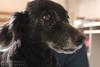 {5/365} Modelo nº 1 (~Miss Croft) Tags: dog animal sweet cachorro minnie 365days 365project projeto365