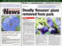 """Deadly 'Amazon' Plant Removed From Park"" - Southwark News @ 29 September 2011 (Pages 1 & 16) (Kam Hong Leung.) Tags: park blue summer plant flower green london nature ecology fauna garden insect fly newspaper leaf flora community purple wildlife cluster seed conservation monk petal lilac stamen council mauve hood bermondsey environment medicine leisure bud pollen poison root press botany wildflower biology horticulture rotherhithe herb southwark hoverfly monkshood biodiversity councillor toxin se16 surreydocks londonpark southwarkpark stamina aconitum pollinator southwarkcouncil southwarknews rcsf rotherhithecommunitysafetyforum kamhongleung leungkamhong adasalter friendsofsouthwarkpark lynneolding adasaltergarden barriehargrove"