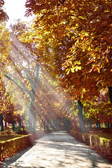 Parque del Retiro (Madrid) (Belén Losas) Tags: musictomyeyeslevel1