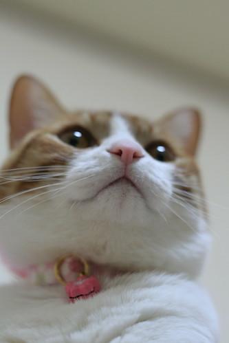 Kinako & Ume collar