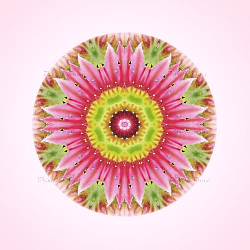 Natur Mandala Feng Shui Bild Partnerschaft Printandpaint A Photo