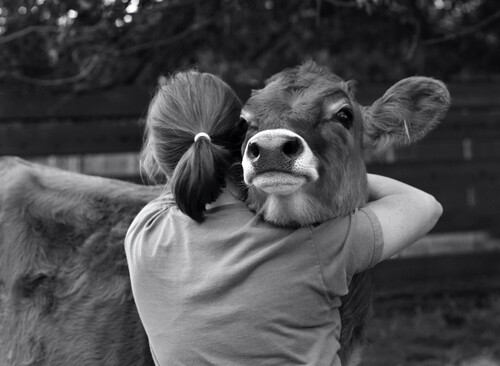 farm animals hugs