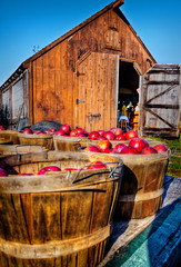 """Apple Harvest at Ashley's in Acushnet, MA.  Photo featured on the cover of the September, 2013, issue of """"South Shore Living Magazine"""". (PapaDunes) Tags: autumn fall barn harvest orchard appleorchard appleharvest route105 autumnbarn acushnetma massachusettssouthshore ashleysapples ashleysfarmstand ashleyspeaches 1461mainst newenglandfarmstand southeasternmassachusettsfarmstand"""