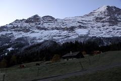 Eiger mit Mittellegigrat ( Berg - Mountain ) in den Alpen - Alps im Berner Oberland im Kanton Bern in der Schweiz (chrchr_75) Tags: oktober mountain alps berg schweiz switzerland suisse swiss alpen christoph svizzera eiger 1110 suissa 2011 chrigu kantonbern chrchr hurni chrchr75 chriguhurni oktober2011 chriguhurni1110 hurni111021 chriguhurnibluemailch bergeiger albumeiger albumzzz201110oktober
