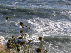 September 5, 2010 2 (asinglebeing) Tags: ocean beach waves novascotia seasky september52010
