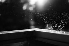 243 (Mattias Lindgren) Tags: bw rain 35mm drops nikon 365 splash nikond300